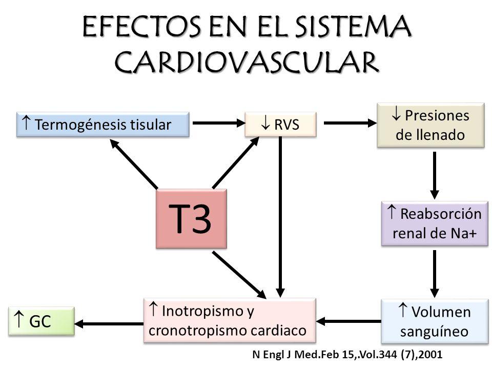 EFECTOS EN EL SISTEMA CARDIOVASCULAR GC Inotropismo y cronotropismo cardiaco Volumen sanguíneo Reabsorción renal de Na+ Presiones de llenado RVS Termo
