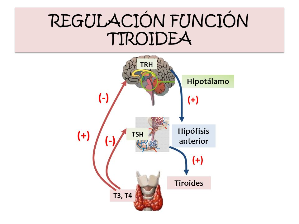 POSTOPERATORIO Tratamiento TORMENTA TIROIDEA Cuidados de soporte gral Corregir factores desencadenantes Técnicas de enfriamiento Infusión con BB Infusión con BB PTU x SNG, o rectal Hidrocortisona/ dexametasona Hidrocortisona/ dexametasona Yoduro de sodio Yoduro de sodio Endocrinol Metab Clin North Am 2006;35:663-86