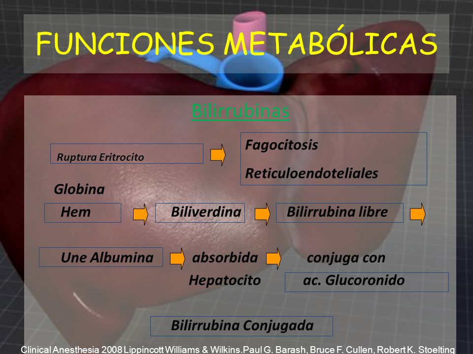 FUNCIONES METABÓLICAS Bilirrubinas Globina Hem Biliverdina Bilirrubina libre Une Albumina absorbida conjuga con Hepatocito ac. Glucoronido Bilirrubina