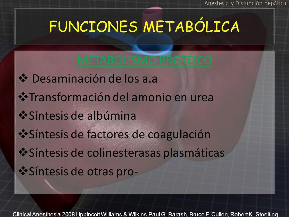 FUNCIONES METABÓLICA METABOLISMO PROTÉICO Desaminación de los a.a Transformación del amonio en urea Síntesis de albúmina Síntesis de factores de coagu
