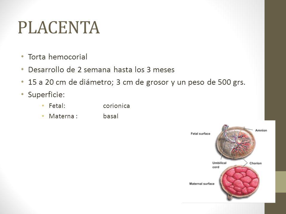PLACENTA Torta hemocorial Desarrollo de 2 semana hasta los 3 meses 15 a 20 cm de diámetro; 3 cm de grosor y un peso de 500 grs. Superficie: Fetal: cor