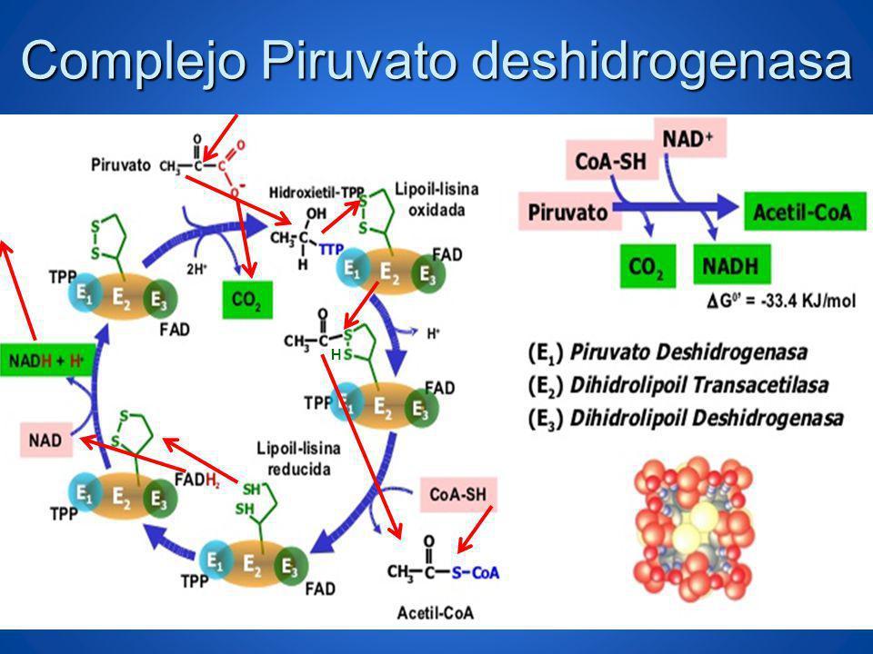 Complejo Piruvato deshidrogenasa H