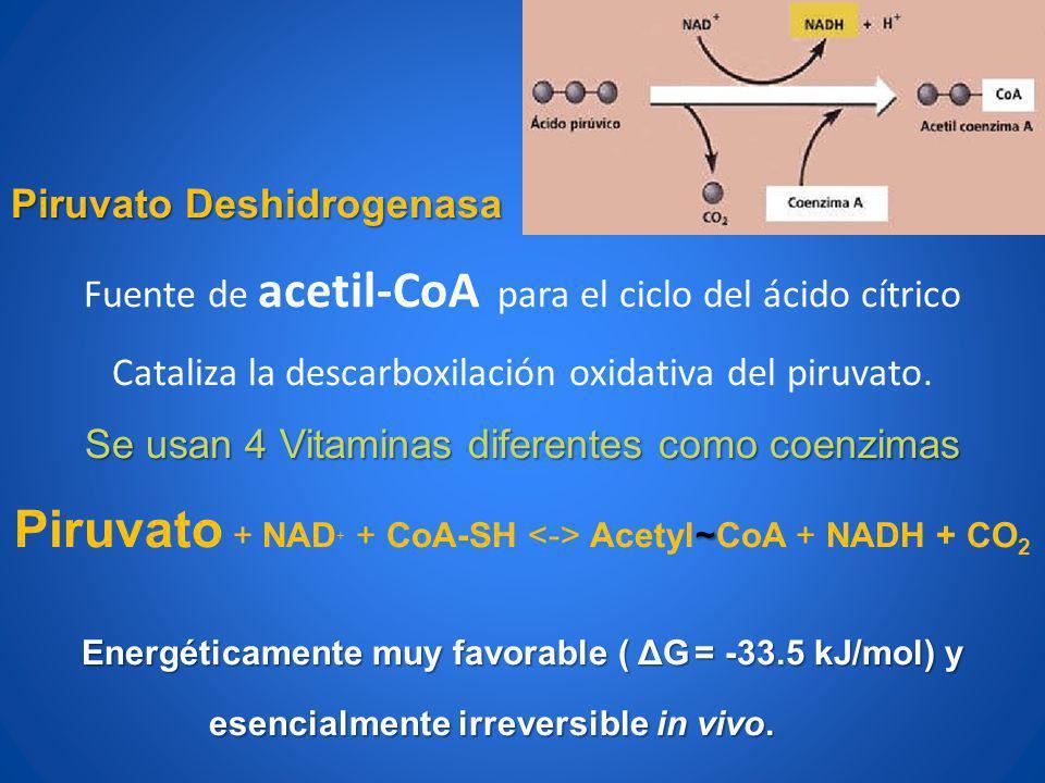 Piruvato Deshidrogenasa Fuente de acetil-CoA para el ciclo del ácido cítrico Cataliza la descarboxilación oxidativa del piruvato. Se usan 4 Vitaminas
