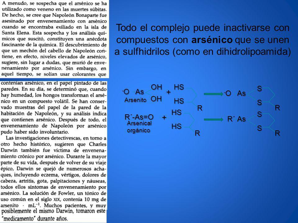 Todo el complejo puede inactivarse con compuestos con arsénico que se unen a sulfhidrilos (como en dihidrolipoamida) R HSHSAs OHOH -O-O-O-O+ R HS HS +
