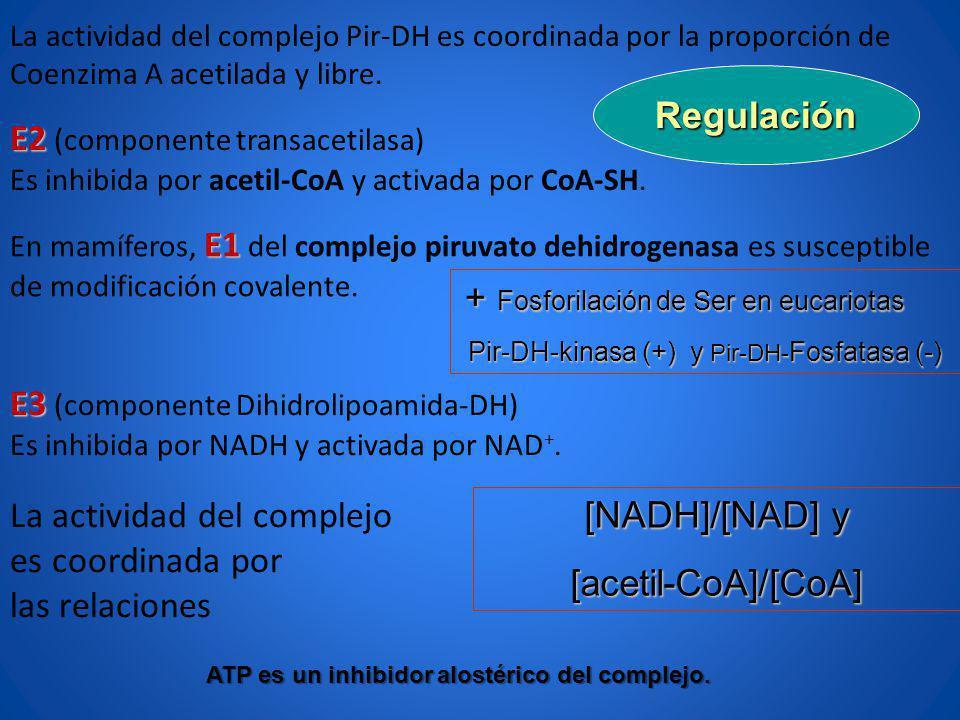 E3 E3 (componente Dihidrolipoamida-DH) Es inhibida por NADH y activada por NAD +. La actividad del complejo es coordinada por las relaciones La activi