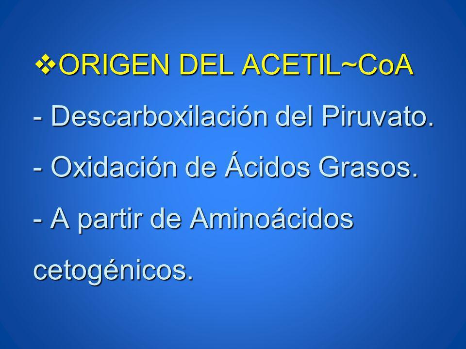 ORIGEN DEL ACETIL~CoA - Descarboxilación del Piruvato. - Oxidación de Ácidos Grasos. - A partir de Aminoácidos cetogénicos. ORIGEN DEL ACETIL~CoA - De