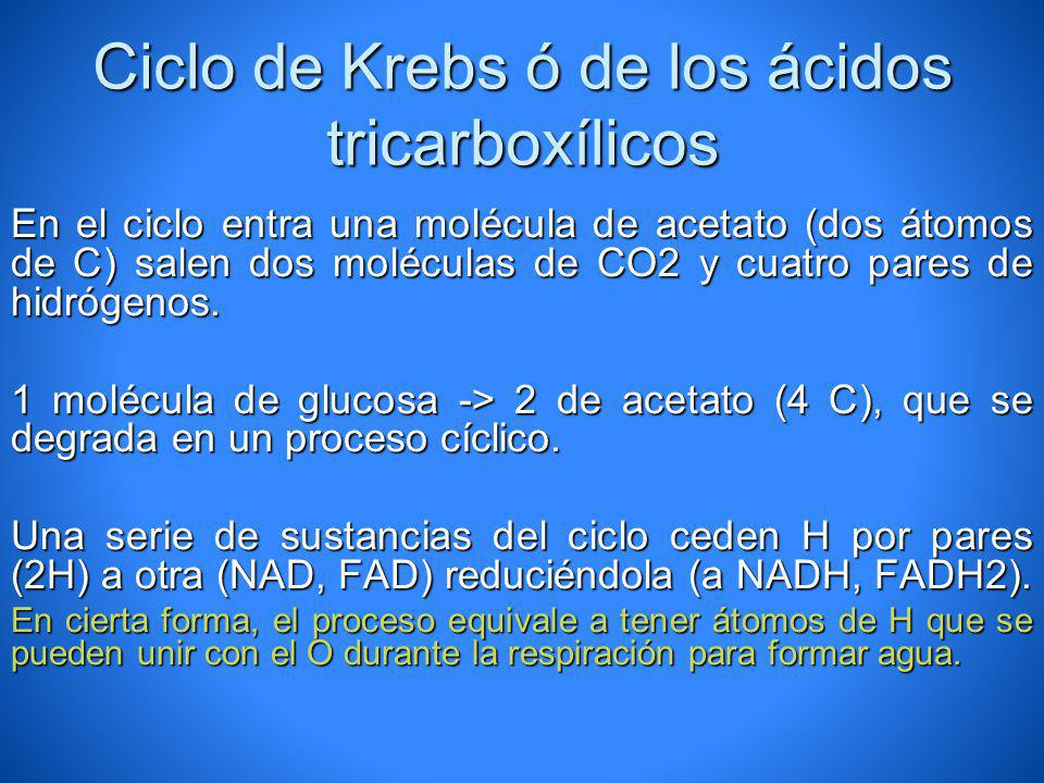 Ciclo de Krebs ó de los ácidos tricarboxílicos En el ciclo entra una molécula de acetato (dos átomos de C) salen dos moléculas de CO2 y cuatro pares d