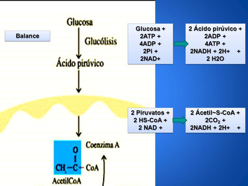 Glucosa + 2ATP + 4ADP + 2Pi + 2NAD+ Glucosa + 2ATP + 4ADP + 2Pi + 2NAD+ 2 Ácido pirúvico + 2ADP + 4ATP + 2NADH + 2H+ + 2 H2O 2 Ácido pirúvico + 2ADP +