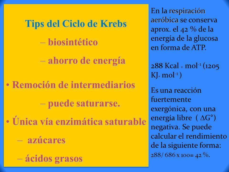 Tips del Ciclo de Krebs – biosintético – ahorro de energía Remoción de intermediarios Remoción de intermediarios – puede saturarse. Única vía enzimáti