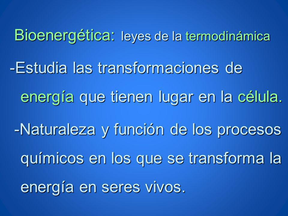 Bioenergética: leyes de la termodinámica Bioenergética: leyes de la termodinámica -Estudia las transformaciones de energía que tienen lugar en la célu