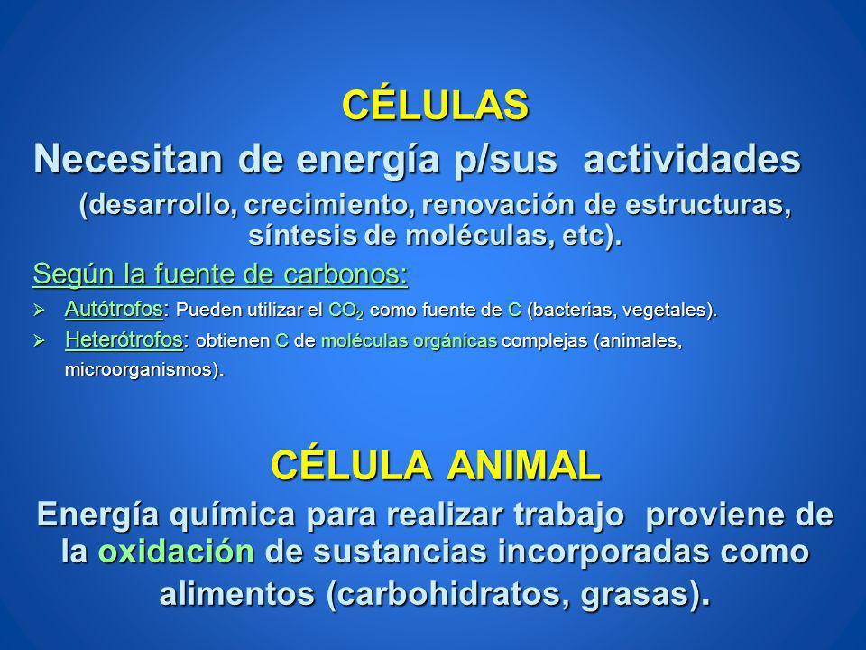 CÉLULAS Necesitan de energía p/sus actividades (desarrollo, crecimiento, renovación de estructuras, síntesis de moléculas, etc). Según la fuente de ca