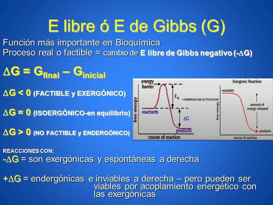 E libre ó E de Gibbs (G) Función más importante en Bioquímica Proceso real o factible = cambio de E libre de Gibbs negativo (- G) G = G final – G inic