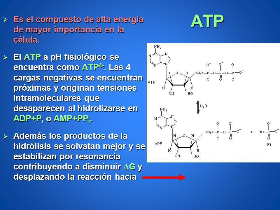 ATP Es el compuesto de alta energía de mayor importancia en la célula. Es el compuesto de alta energía de mayor importancia en la célula. El ATP a pH