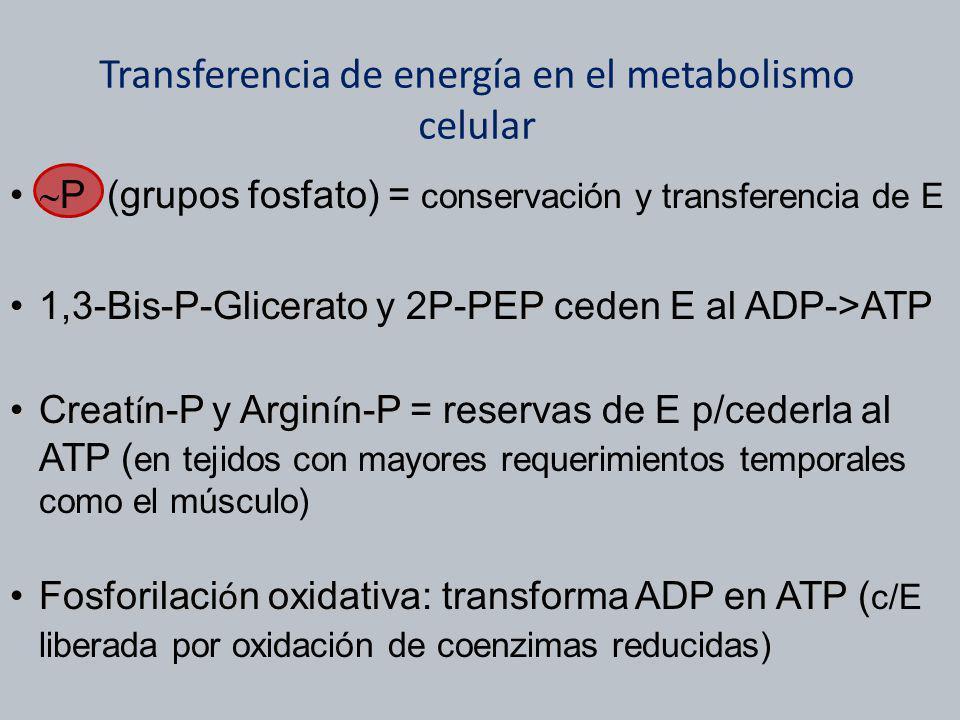 Transferencia de energía en el metabolismo celular P (grupos fosfato) = conservación y transferencia de E 1,3-Bis-P-GliceratoPEPATP1,3-Bis-P-Glicerato