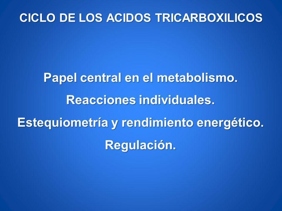 CICLO DE LOS ACIDOS TRICARBOXILICOS Papel central en el metabolismo. Reacciones individuales. Estequiometría y rendimiento energético. Regulación.