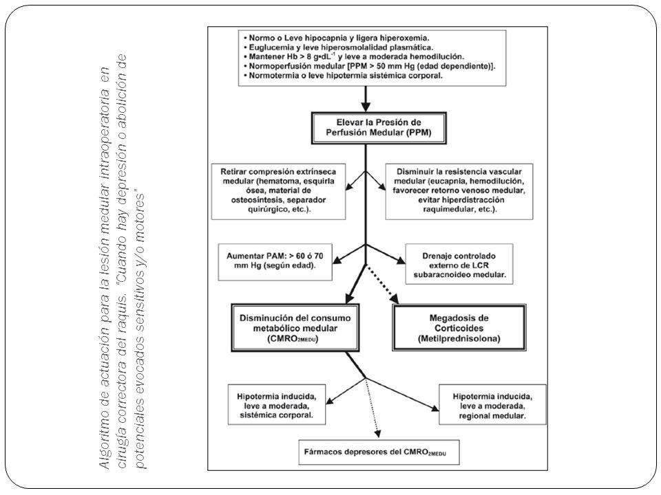 Algoritmo de actuación para la lesión medular intraoperatoria en cirugía correctora del raquis. Cuando hay depresión o abolición de potenciales evocad