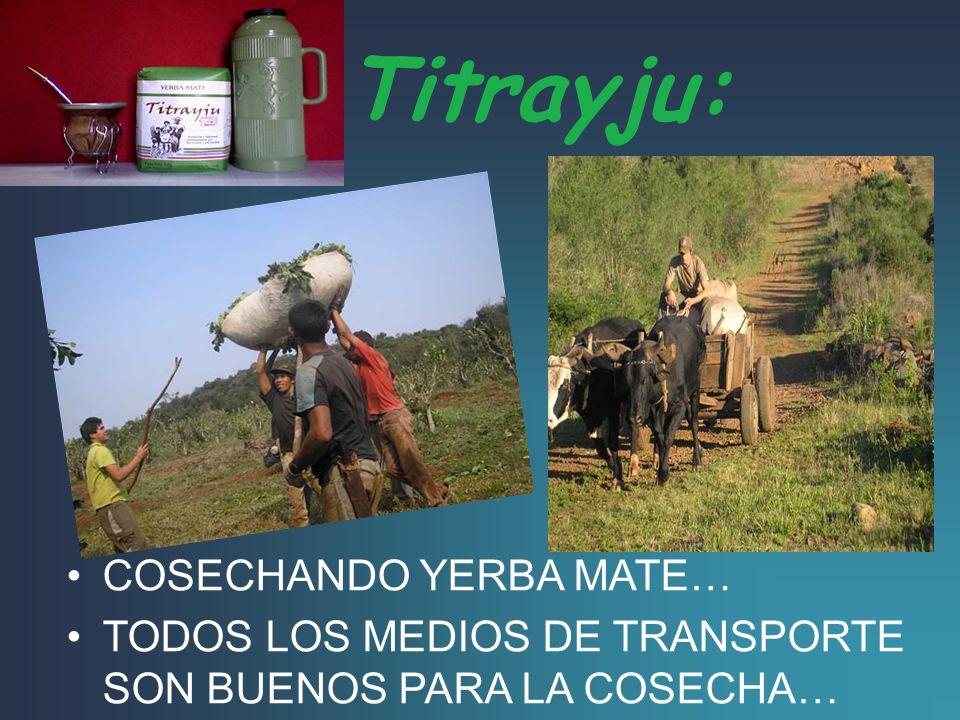 Yerba mate Titrayju: Tierra trabajo y justicia para todos los habitantes del país… Esta yerba fue la principal, es producida y elaborada artesanalment