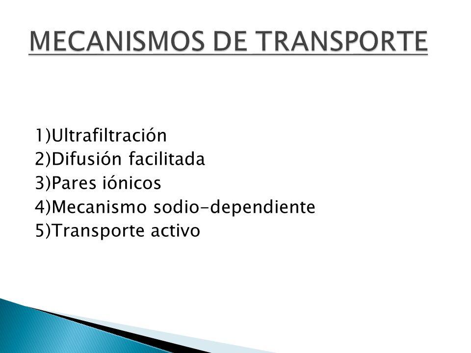 1)Ultrafiltración 2)Difusión facilitada 3)Pares iónicos 4)Mecanismo sodio-dependiente 5)Transporte activo