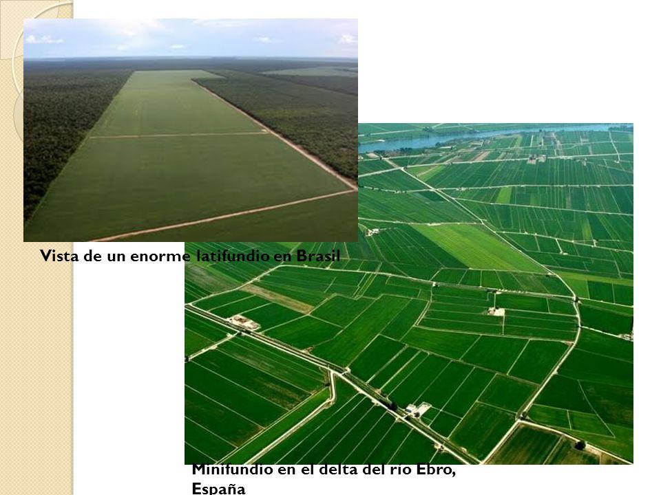 Vista de un enorme latifundio en Brasil Minifundio en el delta del río Ebro, España