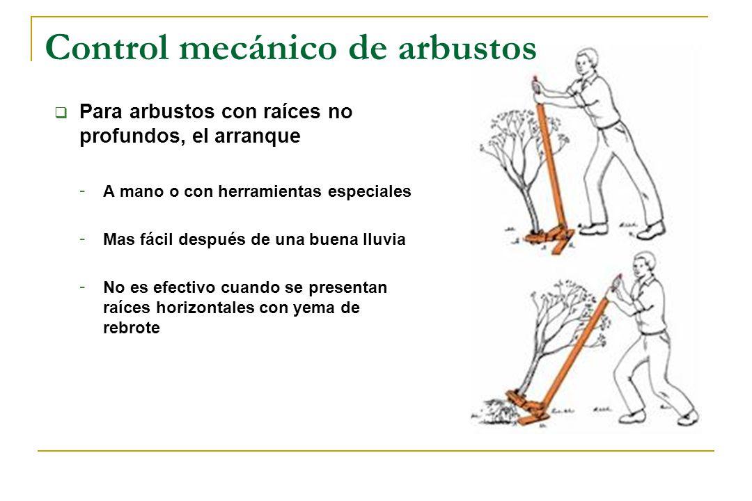 Control mecánico de arbustos Para arbustos con raíces no profundos, el arranque - A mano o con herramientas especiales - Mas fácil después de una buen