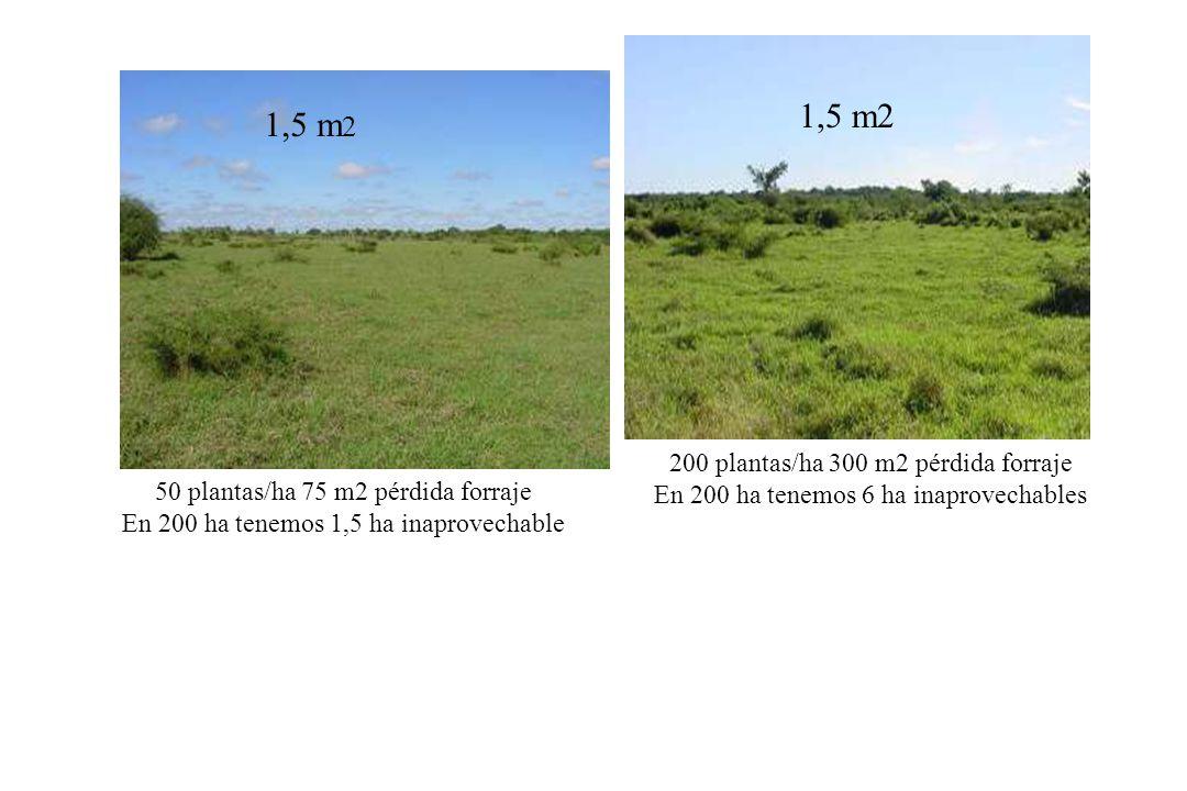 500 plantas/ha 1.500 m2 pérdida forraje En 200 ha tenemos 30 ha inaprovechables 1.100 plantas/ha 4.400 m2 pérdida forraje En 200 ha tenemos 88 ha inaprovechables 3,0 m2 4,0 m2