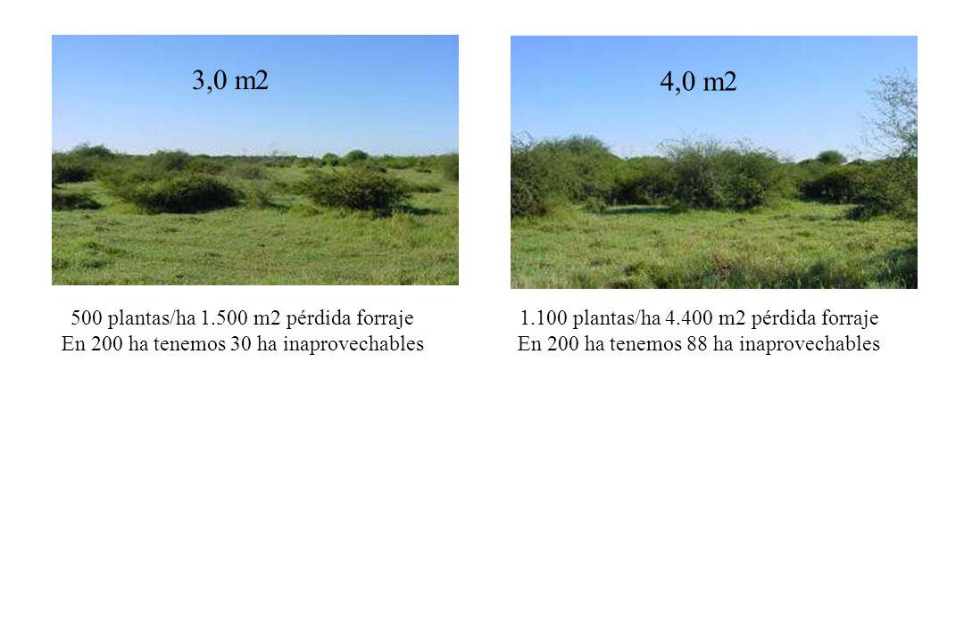 500 plantas/ha 1.500 m2 pérdida forraje En 200 ha tenemos 30 ha inaprovechables 1.100 plantas/ha 4.400 m2 pérdida forraje En 200 ha tenemos 88 ha inap