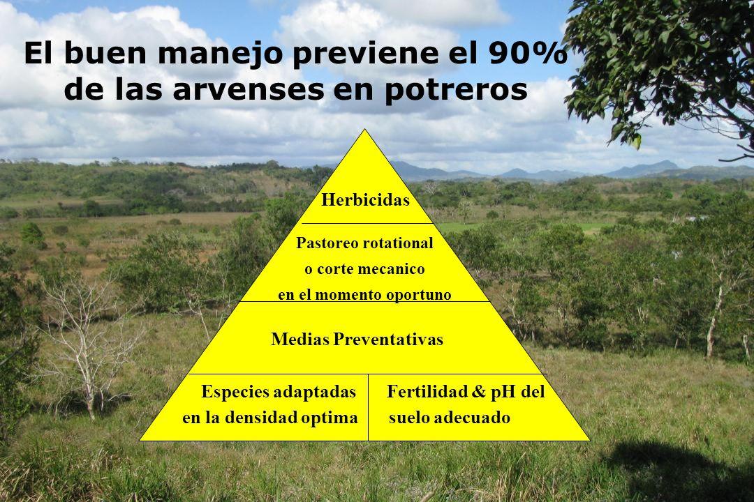 El buen manejo previene el 90% de las arvenses en potreros Herbicidas Pastoreo rotational o corte mecanico en el momento oportuno Medias Preventativas