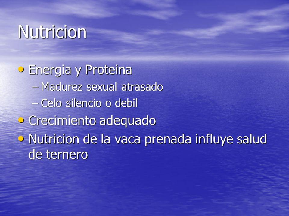 Nutricion Energia y Proteina Energia y Proteina –Madurez sexual atrasado –Celo silencio o debil Crecimiento adequado Crecimiento adequado Nutricion de la vaca prenada influye salud de ternero Nutricion de la vaca prenada influye salud de ternero