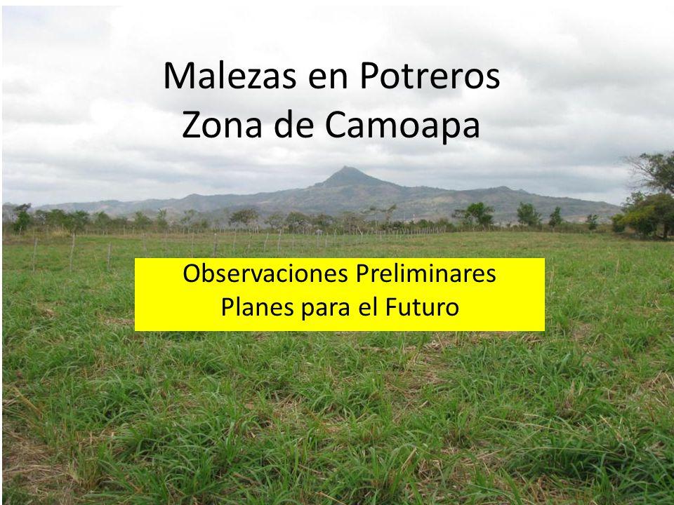 Malezas en Potreros Zona de Camoapa Observaciones Preliminares Planes para el Futuro