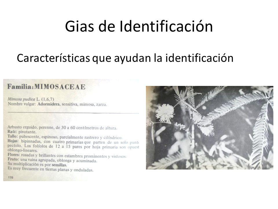 Gias de Identificación Características que ayudan la identificación