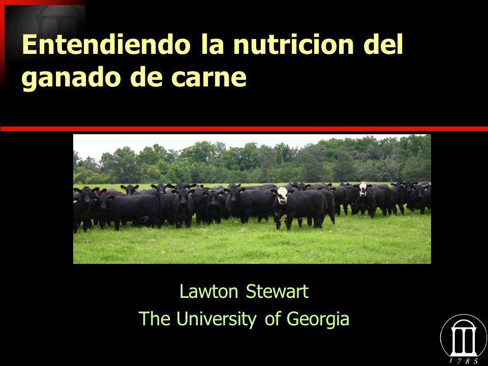 Lawton Stewart The University of Georgia Lawton Stewart The University of Georgia Entendiendo la nutricion del ganado de carne carne