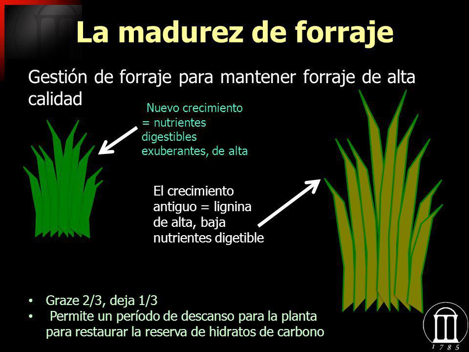 La madurez de forraje Gestión de forraje para mantener forraje de alta calidad Nuevo crecimiento = nutrientes digestibles exuberantes, de alta El crec