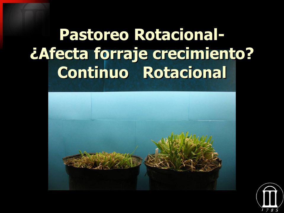 Pastoreo Rotacional- ¿Afecta forraje crecimiento? Continuo Rotacional