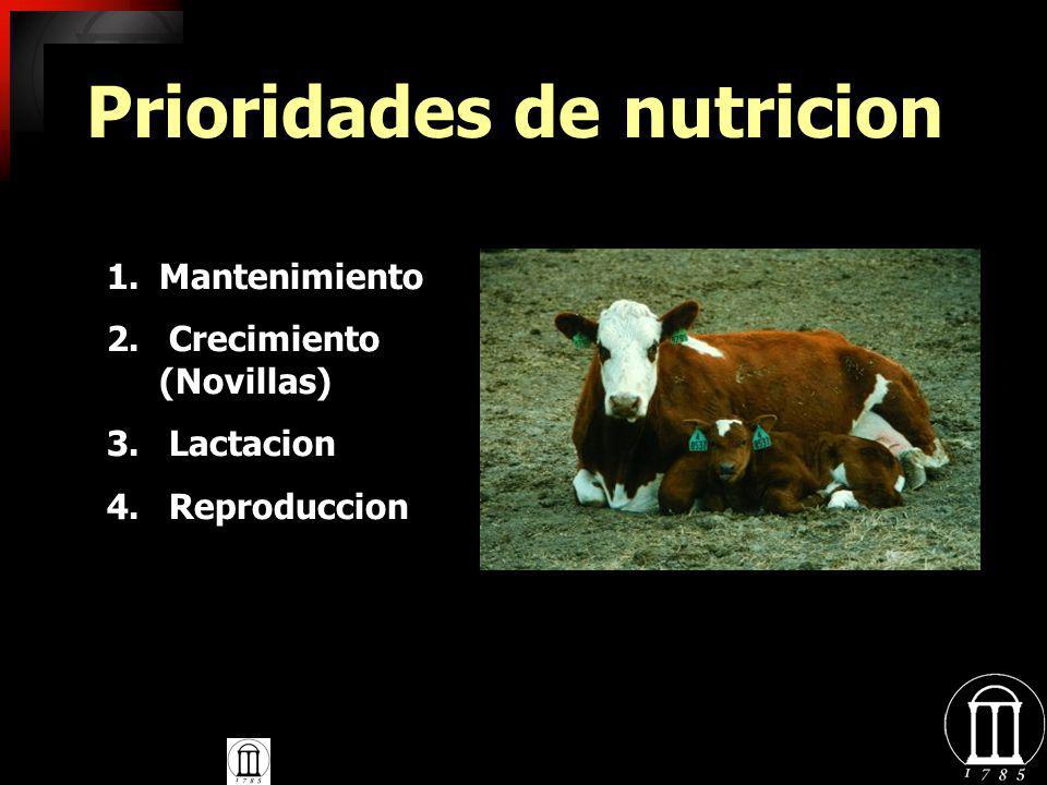 Prioridades de nutricion L. Stewart, UGA Extension 1.Mantenimiento 2. Crecimiento (Novillas) 3. Lactacion 4. Reproduccion