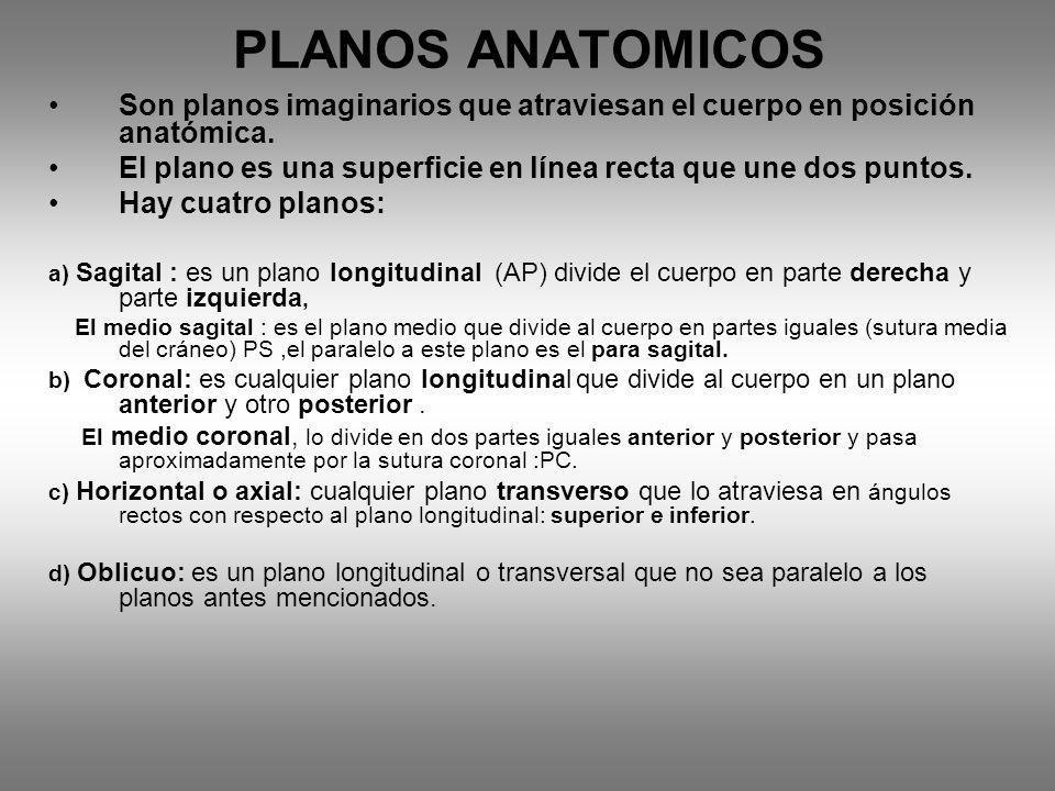 PLANOS ANATOMICOS Son planos imaginarios que atraviesan el cuerpo en posición anatómica. El plano es una superficie en línea recta que une dos puntos.