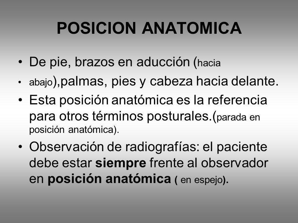 POSICION ANATOMICA De pie, brazos en aducción ( hacia abajo ),palmas, pies y cabeza hacia delante. Esta posición anatómica es la referencia para otros