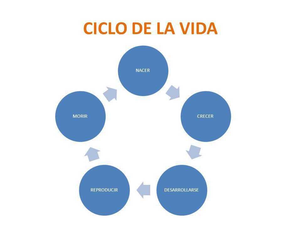 CICLO DE LA VIDA NACERCRECERDESARROLLARSEREPRODUCIRMORIR