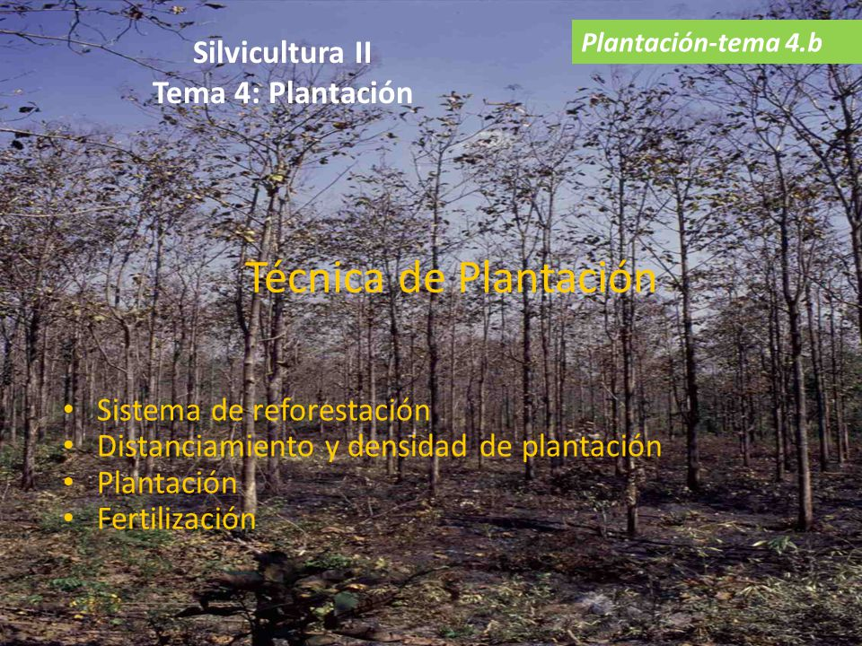 Sistema de reforestación Distanciamiento y densidad de plantación Plantación Fertilización Técnica de Plantación Plantación-tema 4.b Silvicultura II T