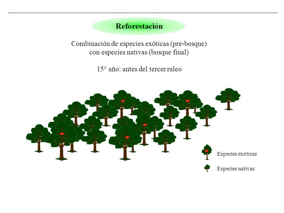 Especies exóticas Especies nativas Reforestación Combinación de especies exóticas (pre-bosque) con especies nativas (bosque final) 15° año: antes del