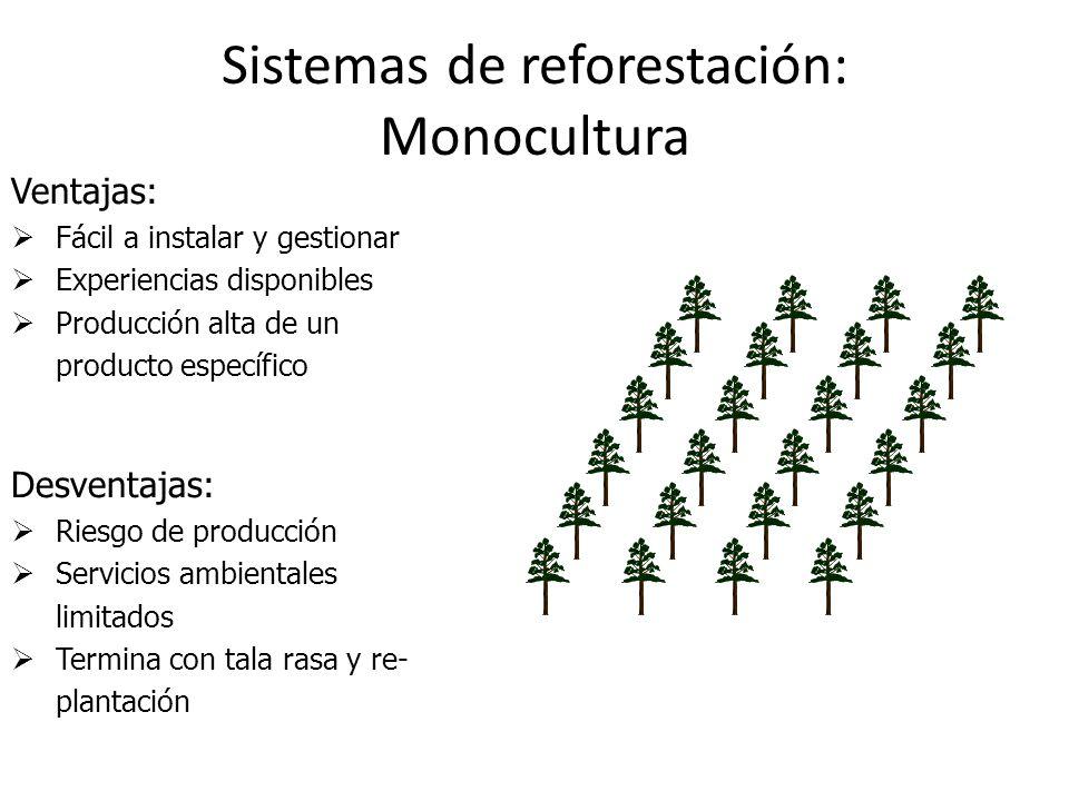 Sistemas de reforestación: Monocultura Ventajas: Fácil a instalar y gestionar Experiencias disponibles Producción alta de un producto específico Desve