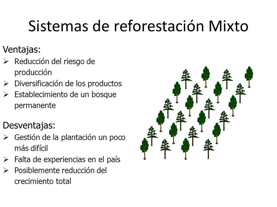 Sistemas de reforestación Mixto Ventajas: Reducción del riesgo de producción Diversificación de los productos Establecimiento de un bosque permanente