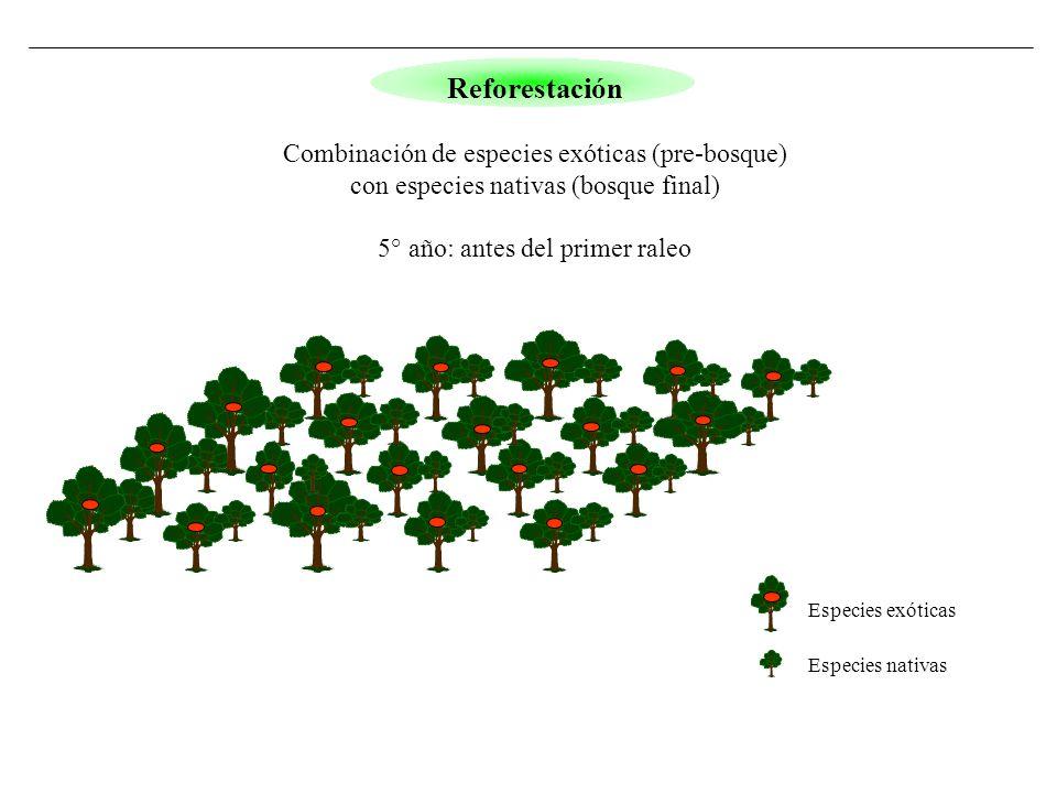 Especies exóticas Especies nativas Reforestación Combinación de especies exóticas (pre-bosque) con especies nativas (bosque final) 5° año: antes del p