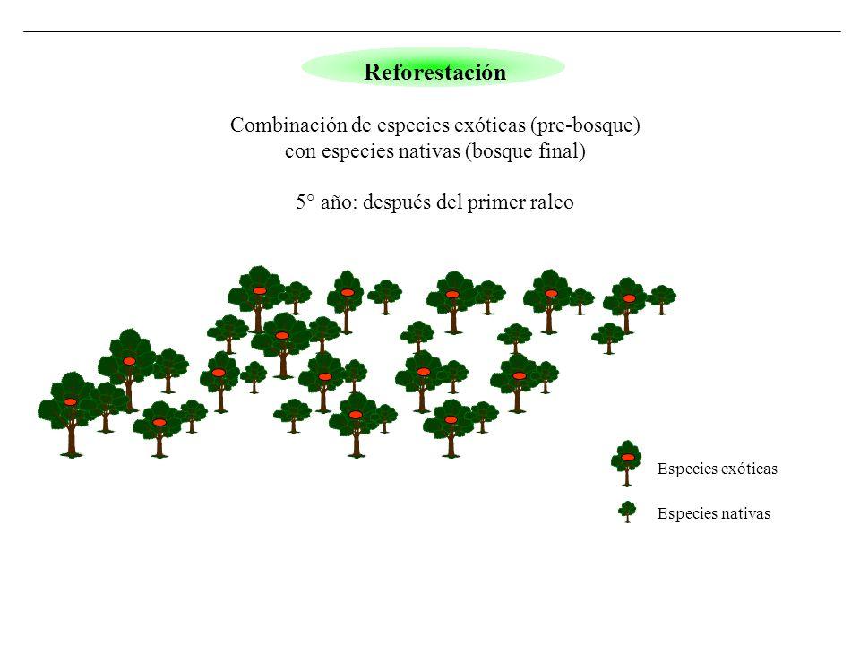 Especies exóticas Especies nativas Reforestación Combinación de especies exóticas (pre-bosque) con especies nativas (bosque final) 5° año: después del