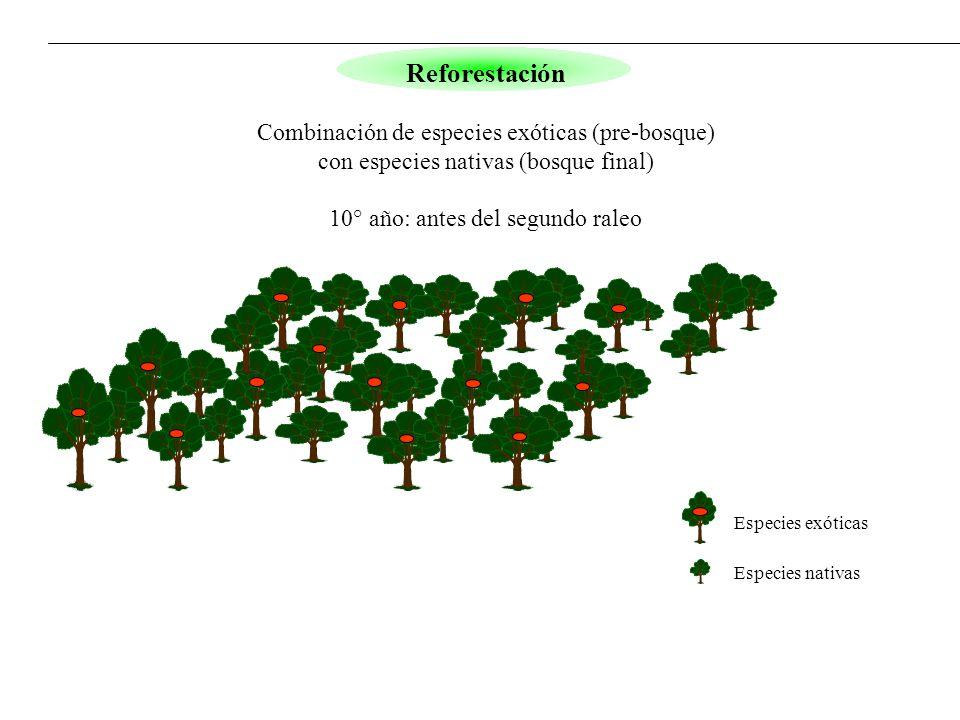 Especies exóticas Especies nativas Reforestación Combinación de especies exóticas (pre-bosque) con especies nativas (bosque final) 10° año: antes del
