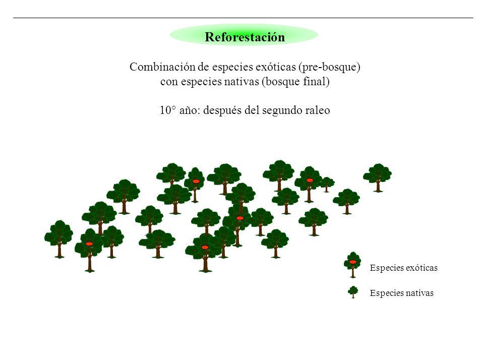 Especies exóticas Especies nativas Reforestación Combinación de especies exóticas (pre-bosque) con especies nativas (bosque final) 10° año: después de