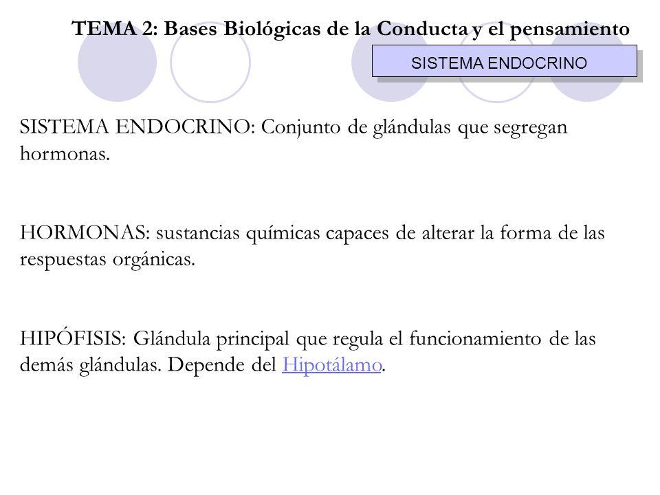 SISTEMA ENDOCRINO SISTEMA ENDOCRINO: Conjunto de glándulas que segregan hormonas. HORMONAS: sustancias químicas capaces de alterar la forma de las res