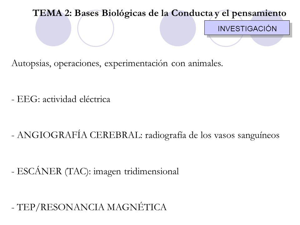 Autopsias, operaciones, experimentación con animales. - EEG: actividad eléctrica - ANGIOGRAFÍA CEREBRAL: radiografía de los vasos sanguíneos - ESCÁNER