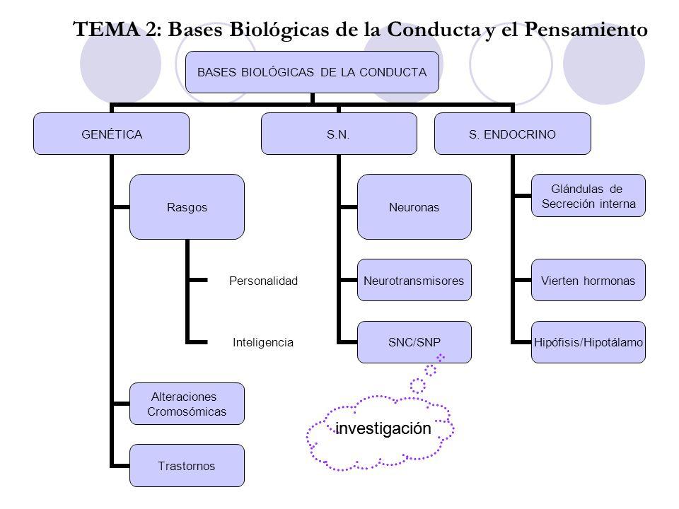 investigación TEMA 2: Bases Biológicas de la Conducta y el Pensamiento