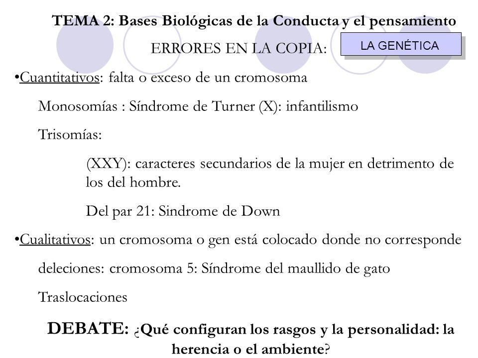 ERRORES EN LA COPIA: Cuantitativos: falta o exceso de un cromosoma Monosomías : Síndrome de Turner (X): infantilismo Trisomías: (XXY): caracteres secu