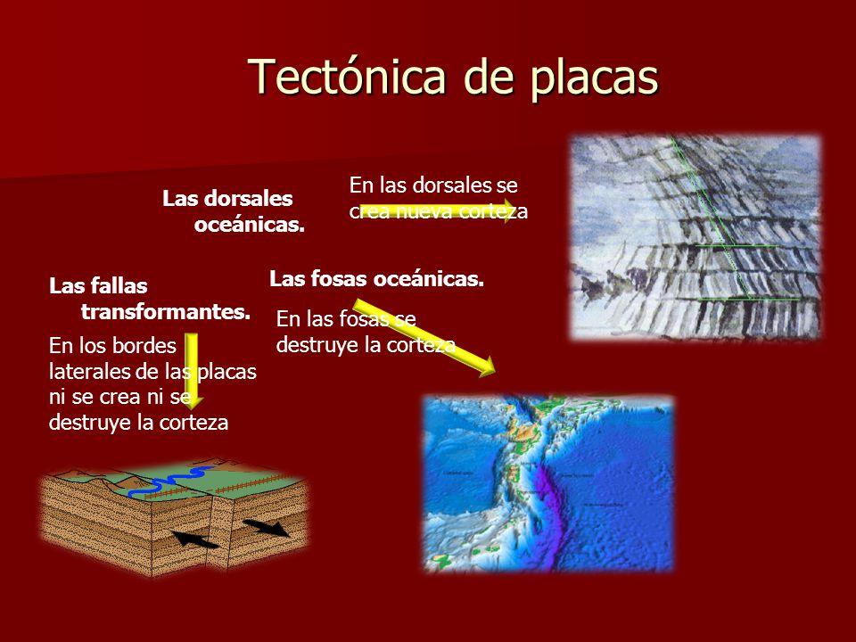 Tectónica de placas Las dorsales oceánicas. Las fosas oceánicas. Las fallas transformantes. En las dorsales se crea nueva corteza En las fosas se dest